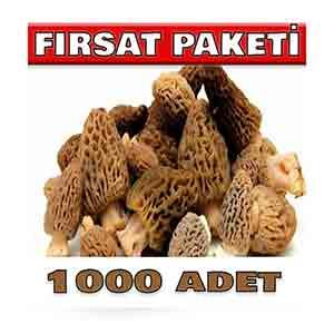 1000-adet-kuzu-gobegi-tohumu