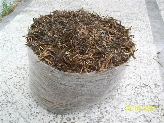 kültür mantarı kompostu hazırlama kültür mantarı miseli nasıl torbalara doldurulur