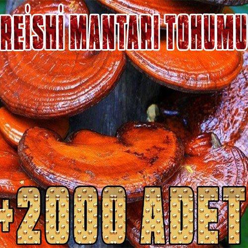 reishi-mantarı-tohumu-miseli-xx